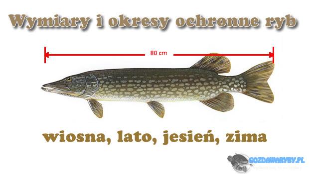Okresy ochronne ryb Okresy ochronne ryb, to czas, w którym łowienie danych okazów jest zabronione. Okresy ochronne ryb zbiegają się w czasie przede wszystkim z momentem największego rozrodu danych gatunków, […]
