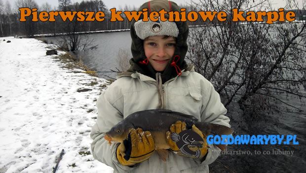 Pierwsze kwietniowe karpie na stawach w Skoroszowie były mała niespodzianką. Ryba nie brała ja w poprzednich dniach. Głównie były płocie i wzdręgi. Ale cierpliwość nam się opłaciła. Przy brzegu, na […]